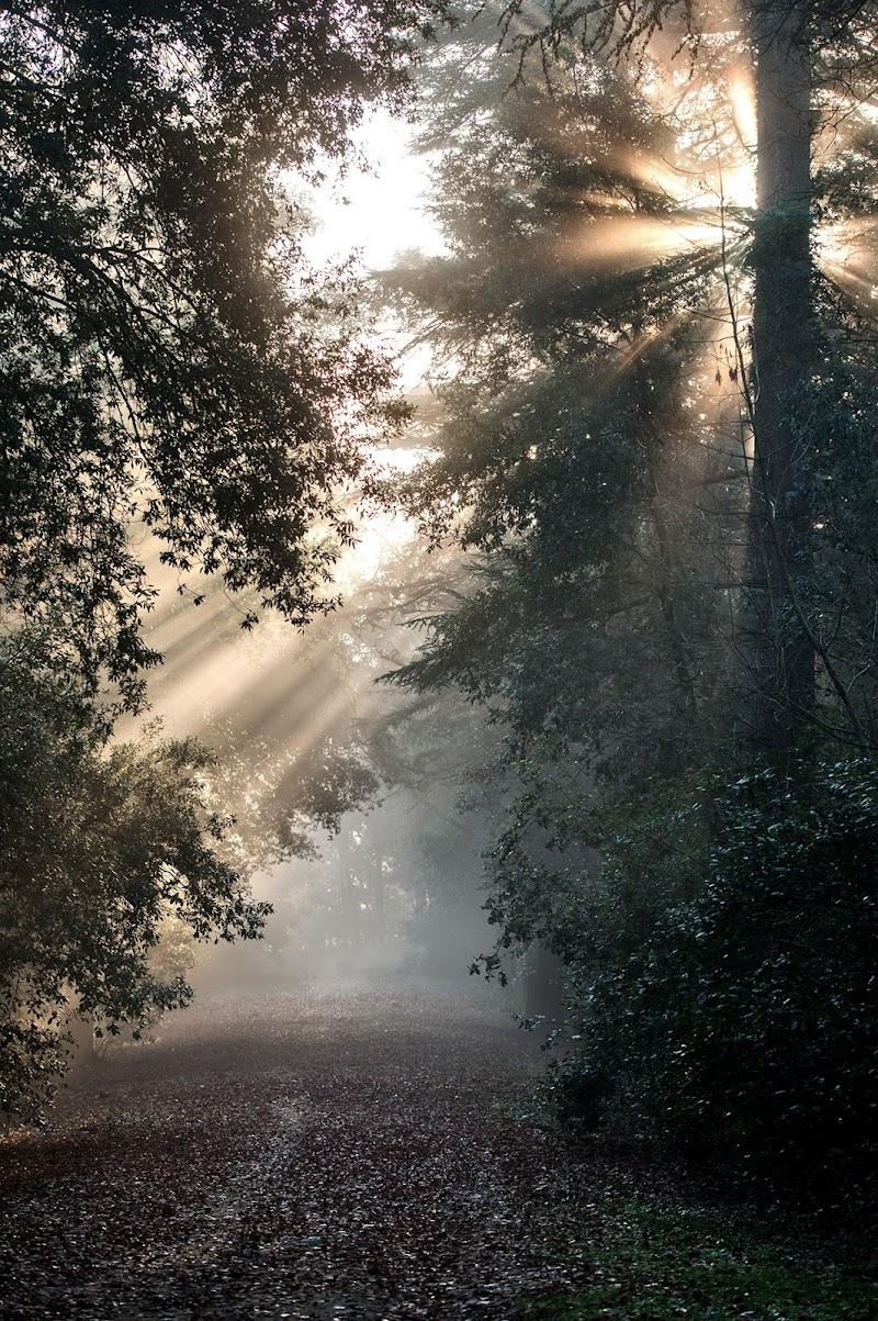 Raggi di sole tra la nebbia di ggf55