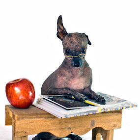 Obedience School by Diana Gunning - Animals - Dogs Portraits ( canine, obedient, school, doggy, nature, pet, apple, book, puppy, dog )
