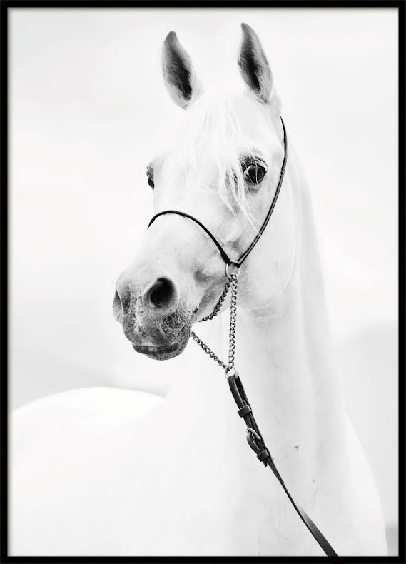 Horse Glance, Poster