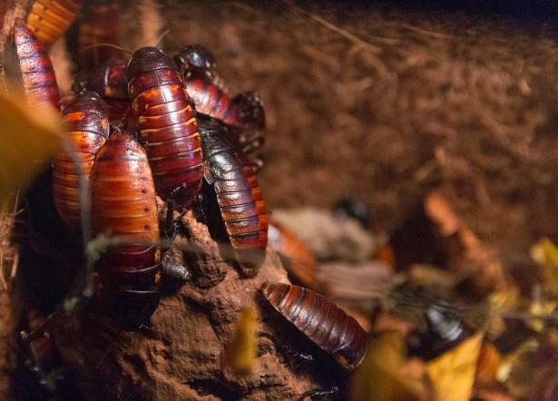 Jak można zapobiegać inwazji karaluchów?