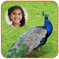 Peacock Photo Frames HD download