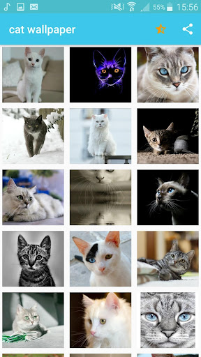2020 Cat Wallpapers Hd Android App Download Latest