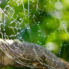 Nobody home by Cecilie Hansteensen - Nature Up Close Webs ( webs, summer, spider, rain, norway,  )