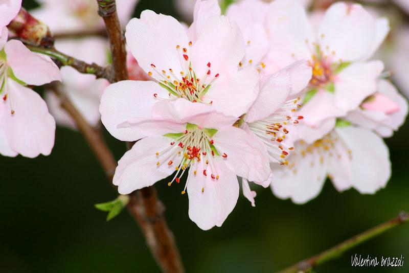 Primavera arrivata.. di Brazzoli Valentina