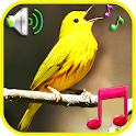 Birds Sounds Ringtones & Wallpapers icon