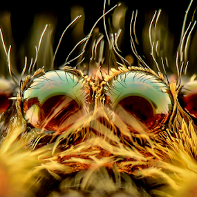 Can't get my eyes over you by Dave Lerio - Animals Insects & Spiders