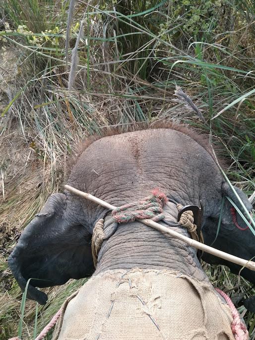象の後頭部