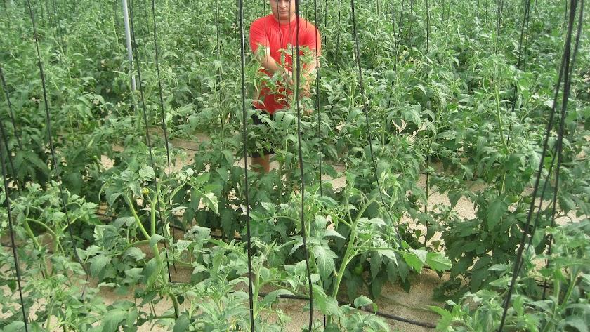 Los agricultores se endeudan más, pero pagan mejor que la media de los españoles