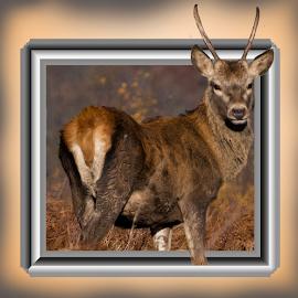 by Paul Scullion - Digital Art Animals ( wild, 3d, framed, digital art, wildlife, animal, deer,  )