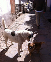 Photo: Checking each other out. Streets of Old Town Cuzco, Peru. July 2012.
