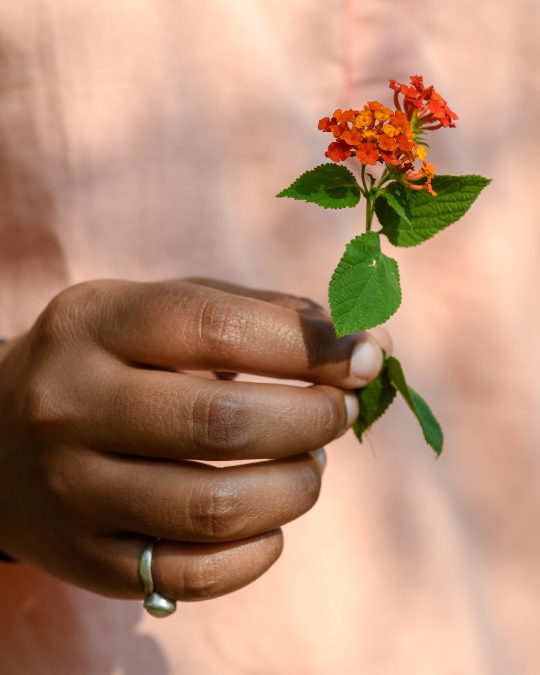 Originally from Central America, lantana out-competes many of India's native species.