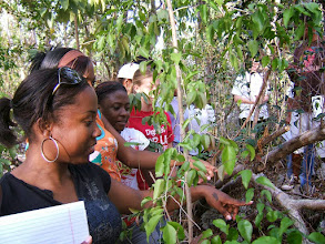 Photo: University College of the Cayman Islands students in the Ironwood Forest,  immediately behind the College, Grand Cayman. Photo: Ann Stafford, May 26, 2009