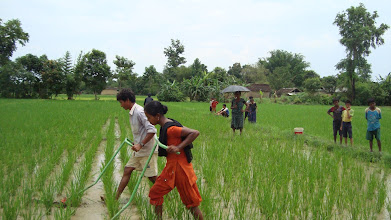 Photo: Man and woman farmers are doing weeding at SRI field at Darakh VDC of Kailali [Photo by Ram B. Khadka, May 2011]
