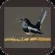 Download Kicau Burung Poci Super For PC Windows and Mac