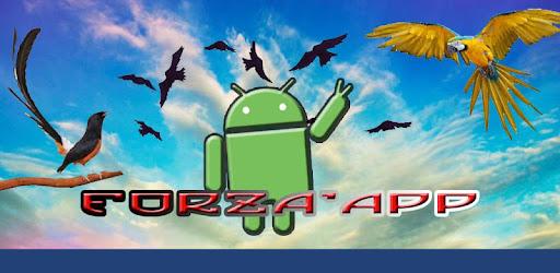 Masteran Prenjak Vs Ciblek On Windows Pc Download Free 2 1 Com Forza Prenjakvsciblek
