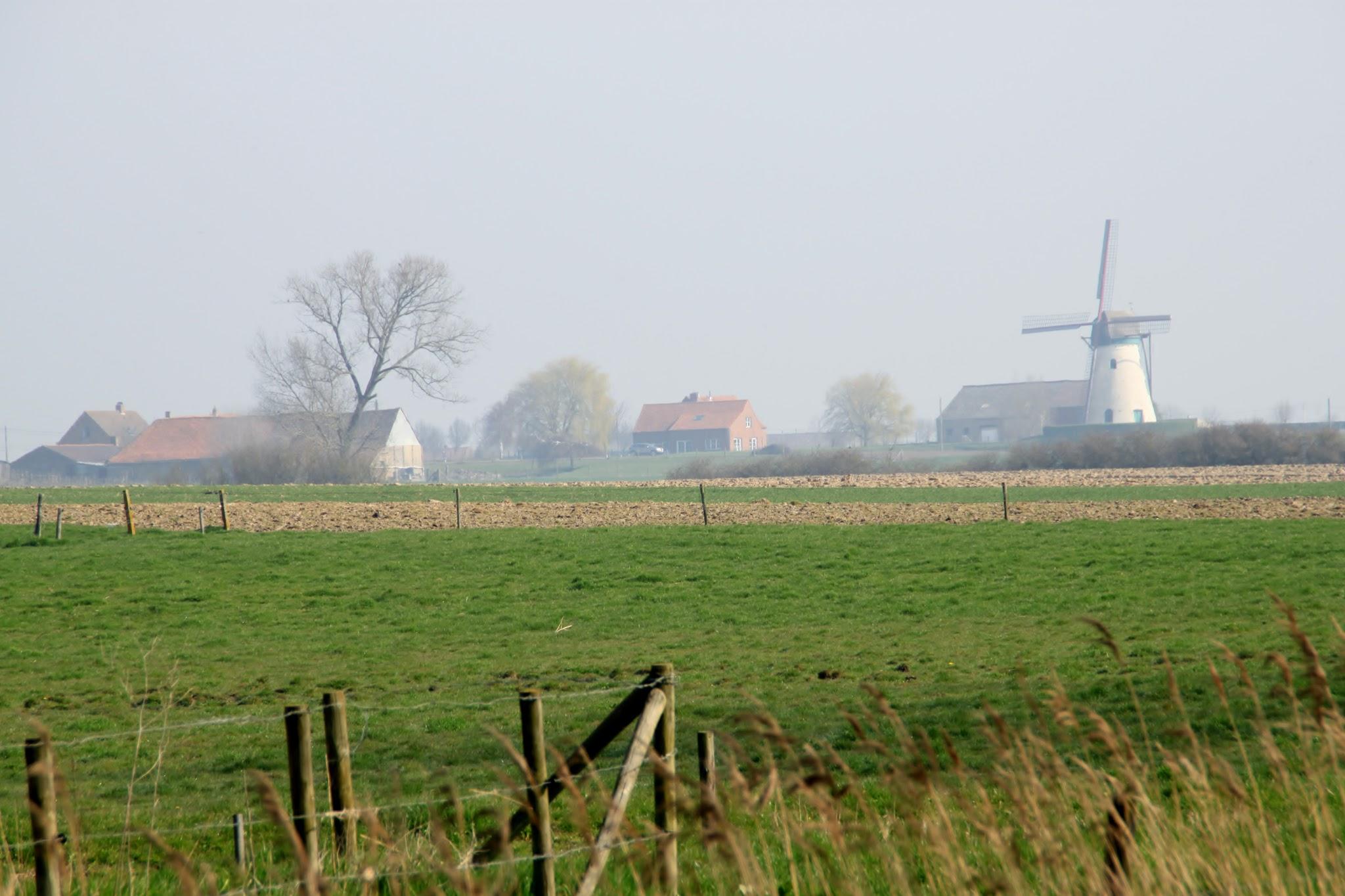 Photo: De Brouckmolen, type grondzeiler, werd in 1872 gebouwd ter vervanging van een houten staakmolen.