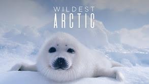 Wildest Arctic thumbnail