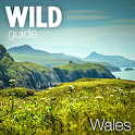 Wild Guide Wales icon