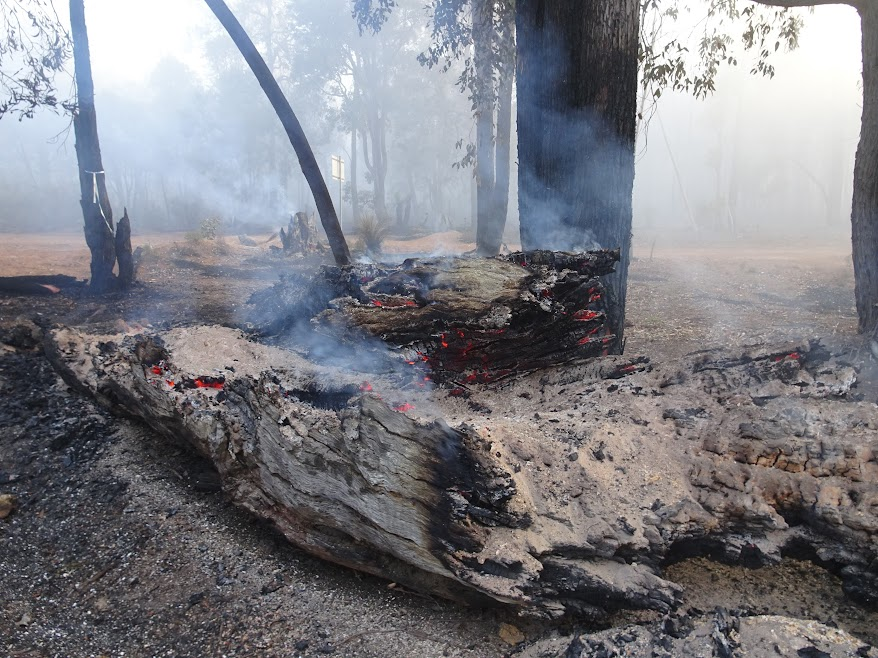 Aftermaths of the prescribed burn