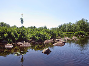 Photo: Entering cove, Position P, that leads to the Lower Woodens River, a lot of Royal Fern, Osmunda regalis, also seen on lakes lower down the watershed. July 22