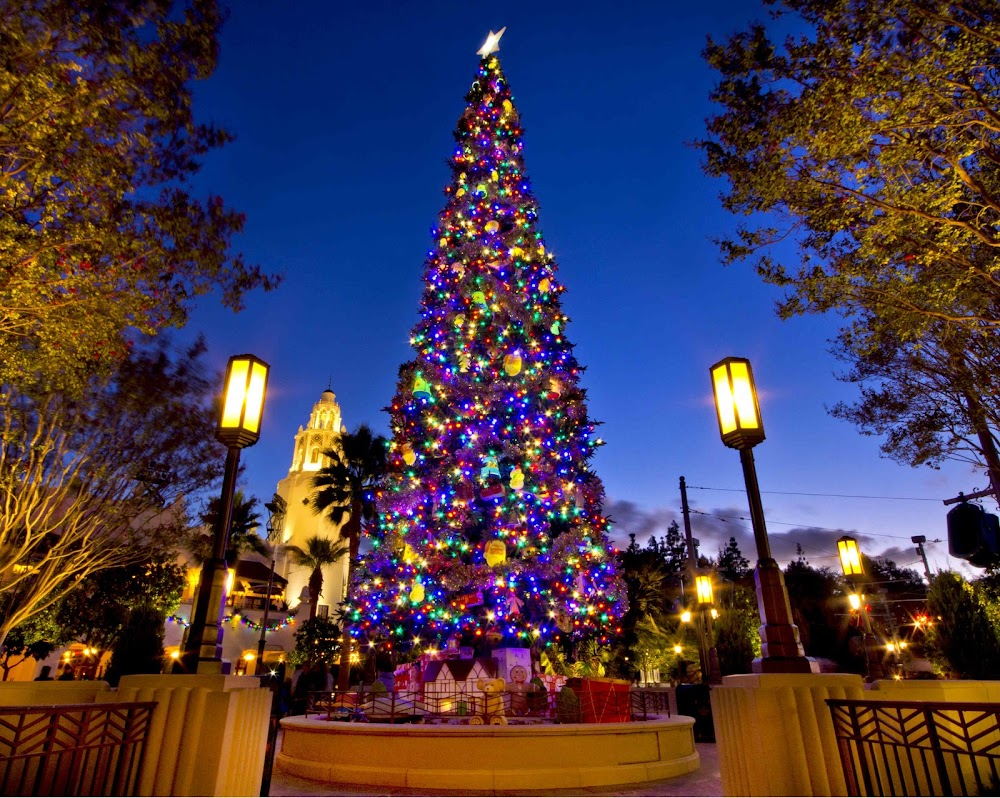 best-places-to-celebrate-christmas-in-india-Shillong
