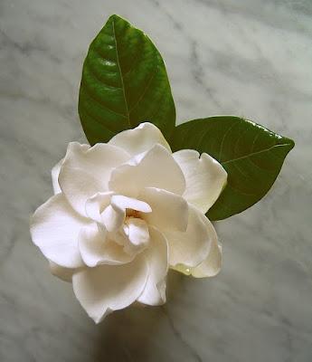Gardenia di Angela1964