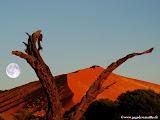 Photo: #116-Les dunes rouges de Sossusvlei sont les plus hautes du monde: 325m