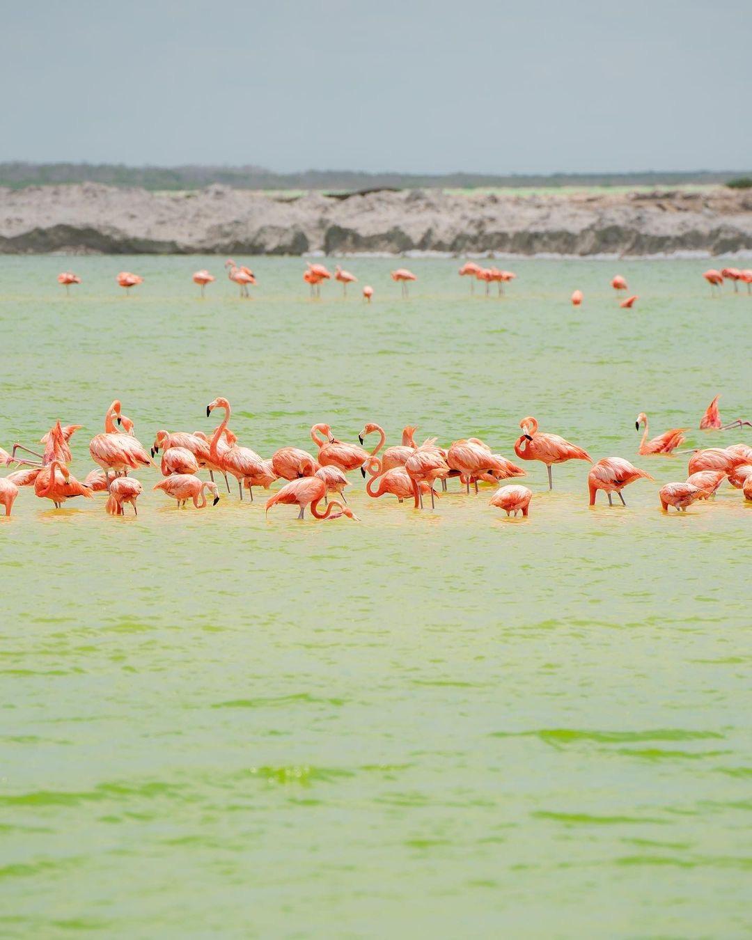 las coloradas merida, yucatan