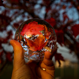 Red by Todd Wallarab - Artistic Objects Glass ( ball, red, tree, fall, glass, leaves )