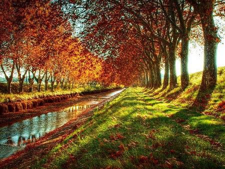 Лангедок - Русильон осенью - канал Дю Миди - осень во франции, куда поехать осенью во Франции, что посмотреть осенью во Франции, осенью в Париж, осенью в эльзас, осенью в Овернь, осенью в Прованс, осенние фестивали Франция, фестивали осенью во Франции, праздники осенью во Франции, осенние праздники, золотая осень во Франции