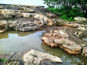 Photo: Acorn Ponds & Waterfalls, we install ponds, water features and low maintenance water gardens. #PondMaintenance and renovation are our specialties. Check out our website www.acornponds.com and give us a call 585.442.6373.   Ecosystem #PondFiltration: the water travels down to this area where it is skimmed and stored deep underground ( which cools it). The water is then pumped up to a Wetland Filter where the Waterfall begins.  For more info about Pond Filtration please click here: www.acornponds.com/pond-filtration.html  To learn more about Pond Construction please click here: www.acornponds.com/pond-construction.html  Check out our photo albums on Pinterest here: www.pinterest.com/acornlandscape/  Click here for a free Magazine all about Ponds and Water Features: http://flip.it/gsrNN  Contact Acorn Ponds & Waterfalls today at 585-442-6373  www.acornponds.com We can help you with any pond problems you might have.