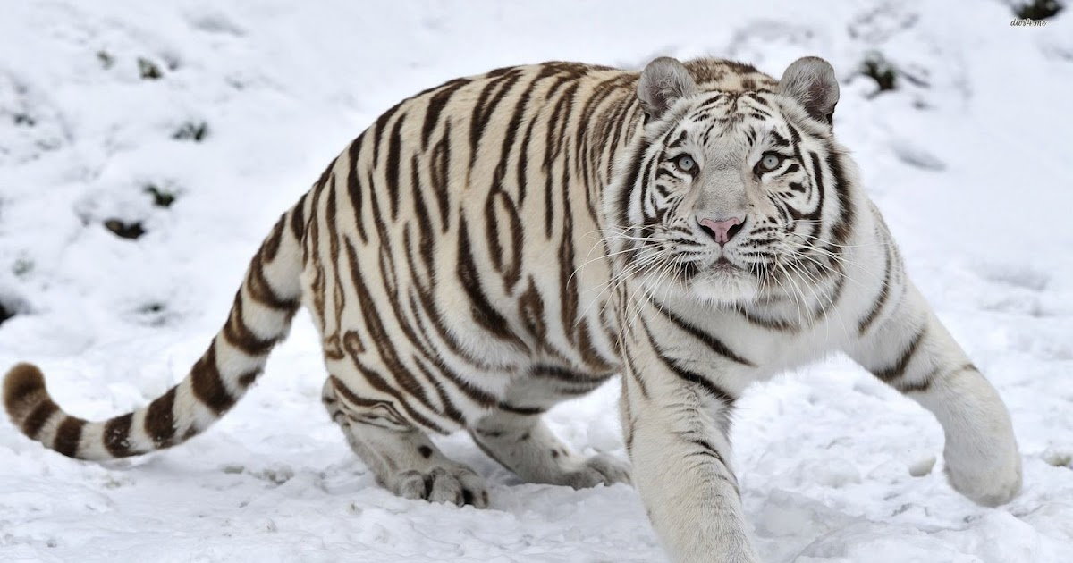 11 Animals That Are Endangered In South Korea