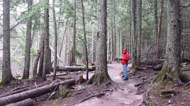 Photo: On the trail to Avalanche Lake