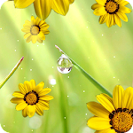 Flower photo Live Wallpaper Icon