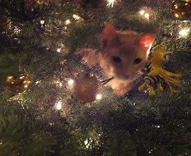 Photo: The ornament we didn't plan for.