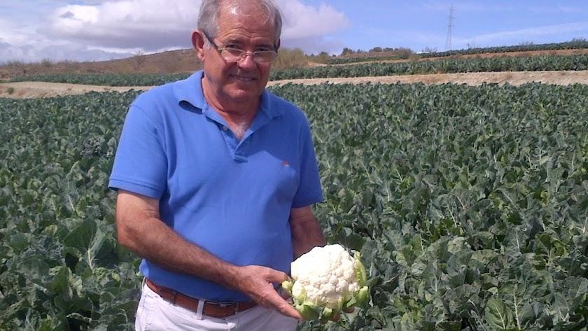 Pascual soler,  presidente de Tomasol, sostiene una coliflor.
