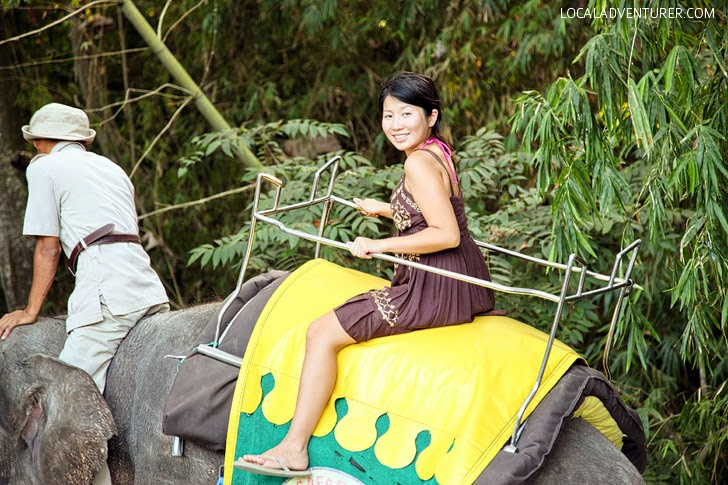 Elephant Safari Park (What to Do in Bali).