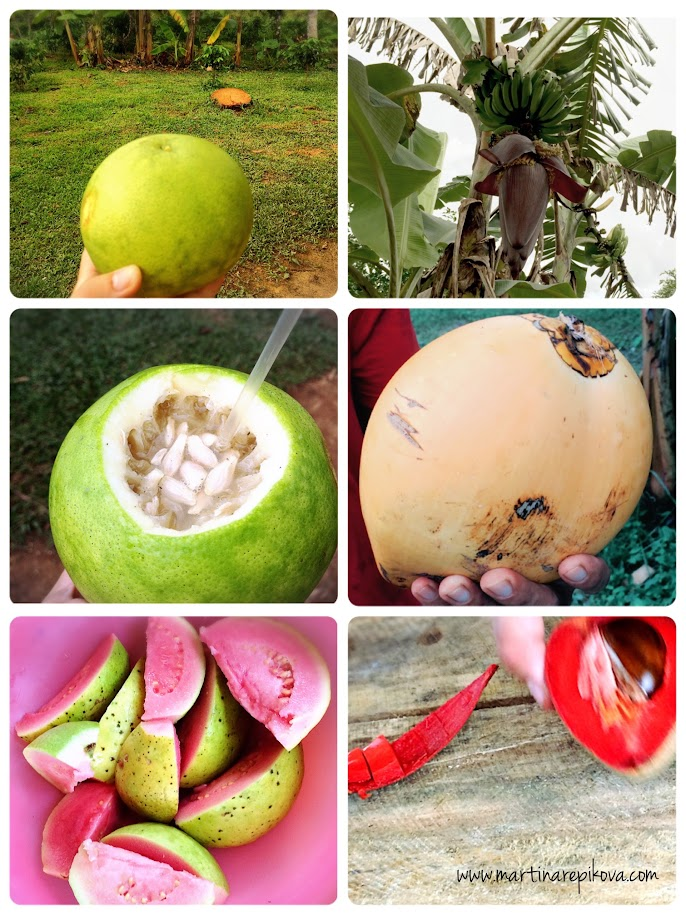 Fresh fruit - directly from a farm, Cuba