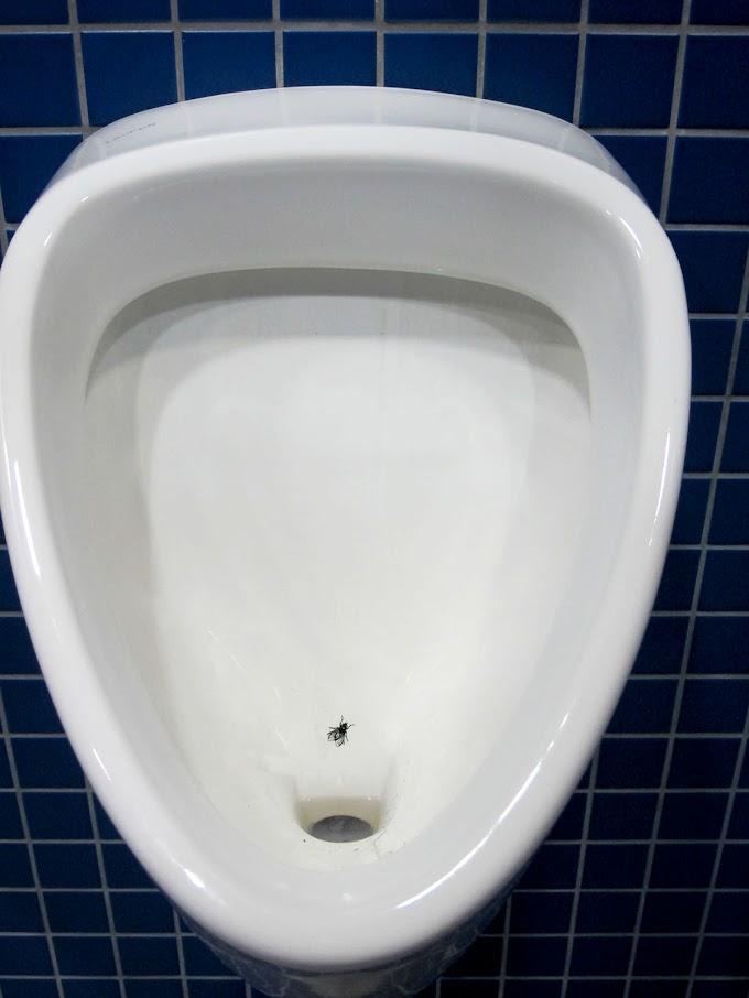 """""""Погляньте, як гарно стало"""", - у Харкові відкрили туалет з акваріумом і щебетанням птахів за 5 млн бюджетних гривень - Цензор.НЕТ 1607"""