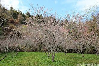 Photo: 拍攝地點: 梅峰-梅園 拍攝植物: 梅花(見驚) 拍攝日期: 2014_02_18_FY
