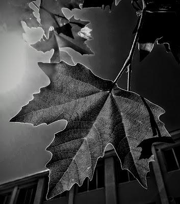 Attraverso le foglie di Robyvf