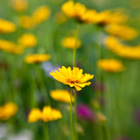 by Kristin Granata - Nature Up Close Flowers - 2011-2013