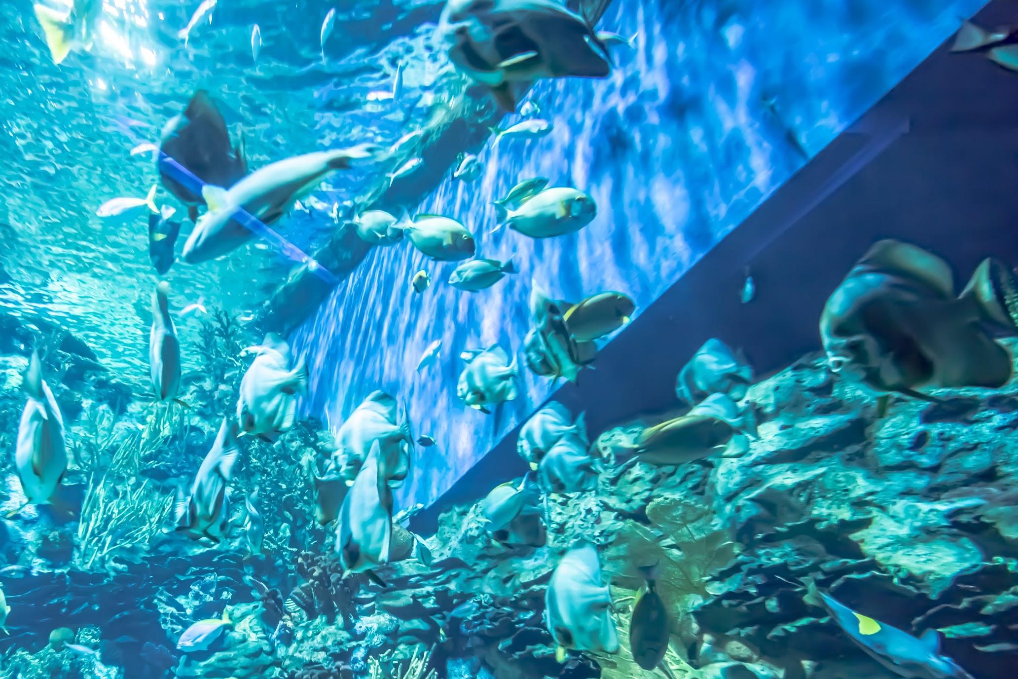 香港 海洋公園(オーシャンパーク) 水族館3