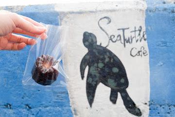 海龜咖啡 SeaTurtle Cafe