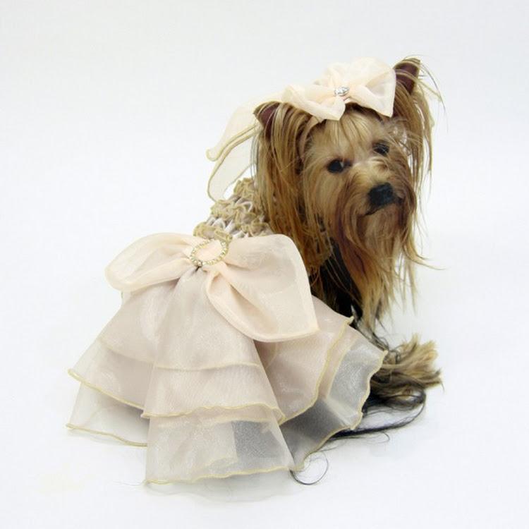 [Valentine PROMO] Jaiden Dog Wedding Gown by Pets Manic