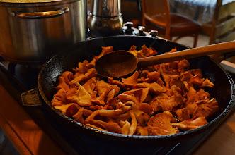 Photo: Kurki , kura dla wegetarian