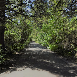 Sunlit Path by Patricia Phillips - Landscapes Travel ( alaska seward paths sunshine shadows )