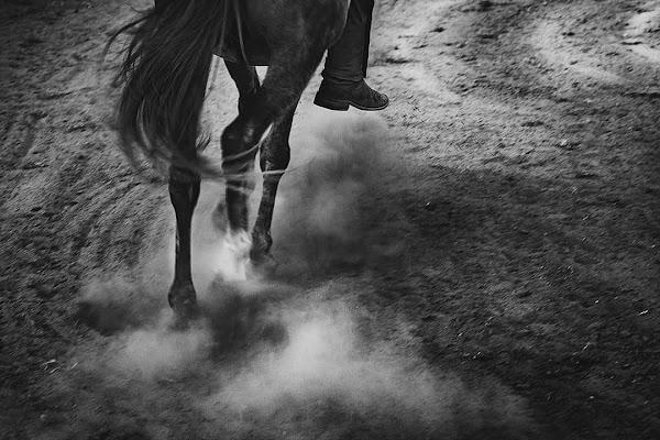 In Horse we trust di be_valentines
