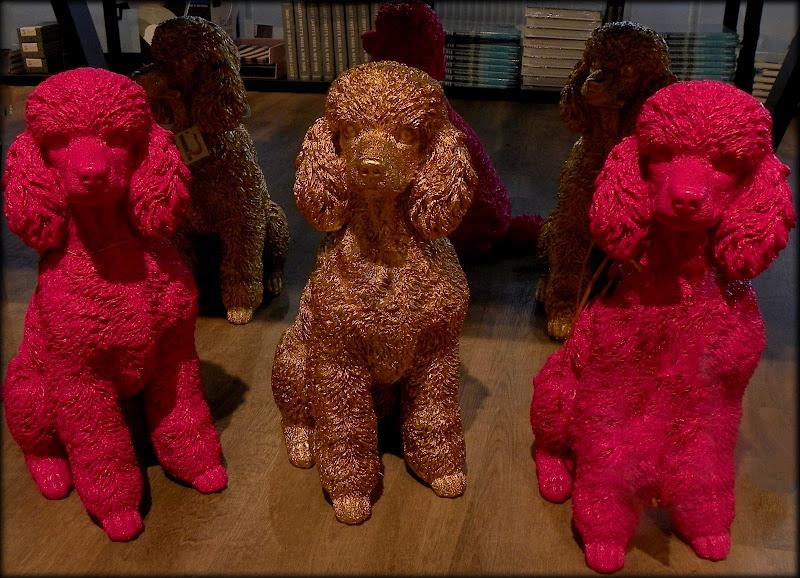 pinkgold poodles di mariateresacupani