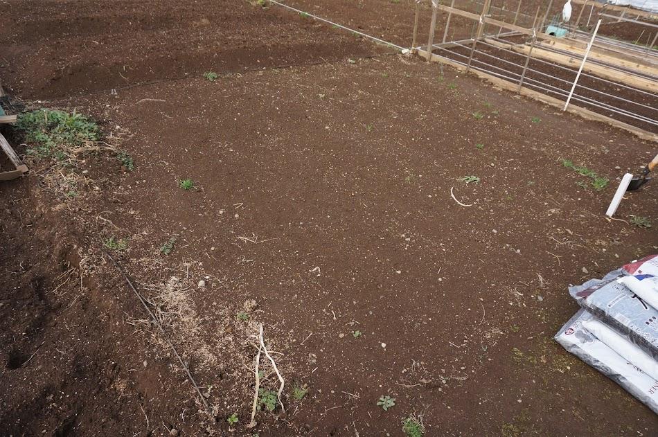 耕す前の畑